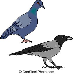 Crow and pigeon illustration