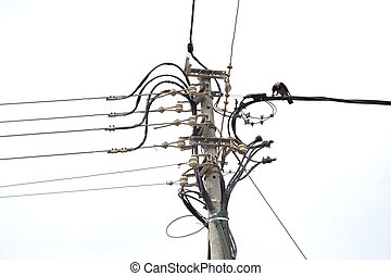 crow as an electrician