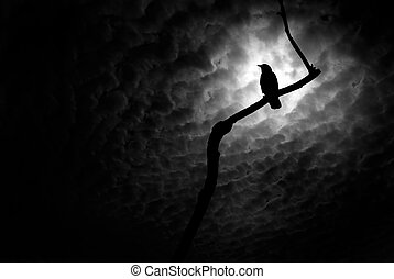 Crow at Rest - Crow or raven resting on a barren tree...