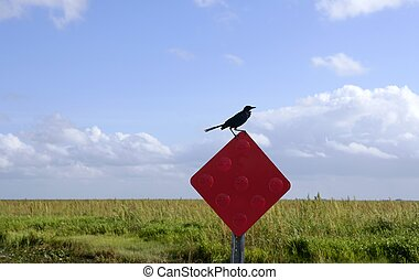 Crow black bird over a red signal in everglades