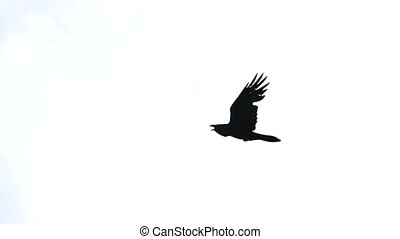 crow flies across the sky and screams, mysticism and vikings