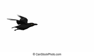 Crow Flying - A crow flying on a white background