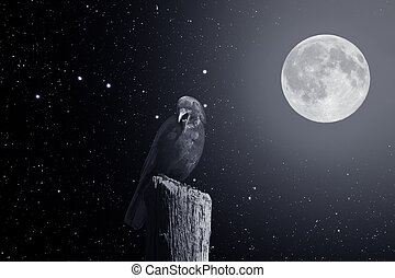 Crow in a starry full moon night