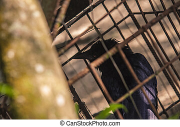 Crow in cage