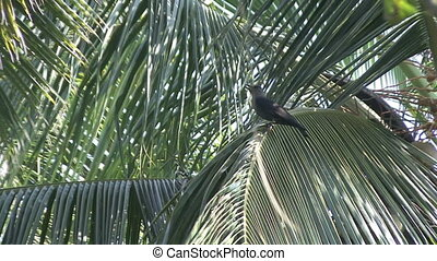 crow India