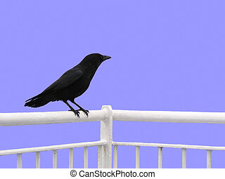 Crow (isolated) - Crow sitting on a railing. Isolated and ...