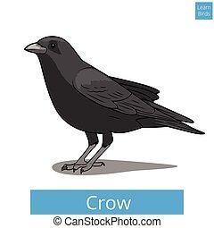 Crow learn birds educational game vector