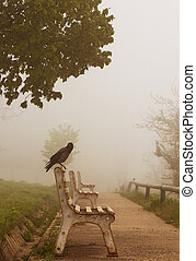 Crow on a park bench in a fog day