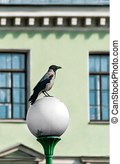 Crow on a street lamp.