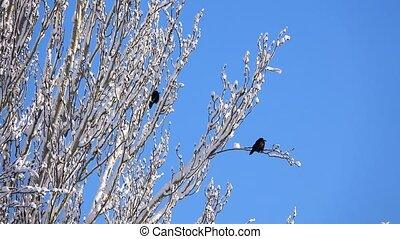crow on a tree in the wood in sunny day