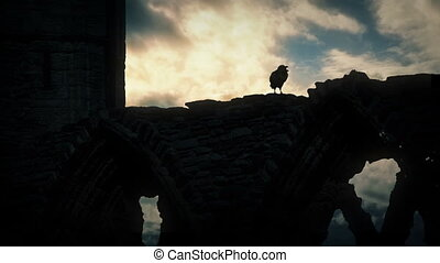 Crow On Building Ruins At Sunrise - Crow on old ruins...