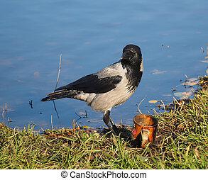 crow on the lake