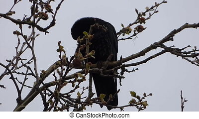 Crow on tree