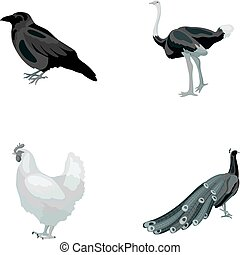 Crow, ostrich, chicken, peacock. Birds set collection icons in monochrome style vector symbol stock illustration web.