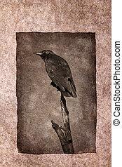 Crow Perched on Dead Tree - Crow perched on dead tree branch...