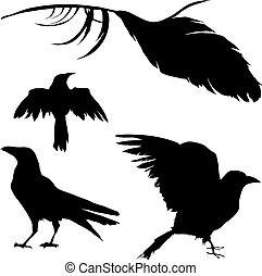 Vector silhouette set of a crow, raven, bird, and feather.