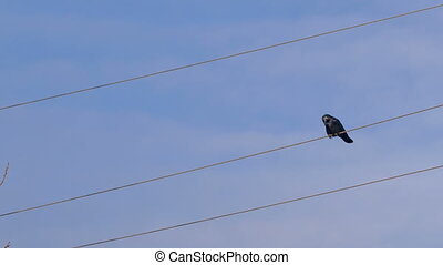 Crow replace other place on a wire