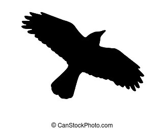 crow silhouette on a white background