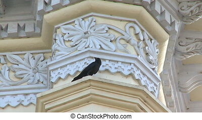 Crow sitting on a building - A steady, low angle, close-up ...