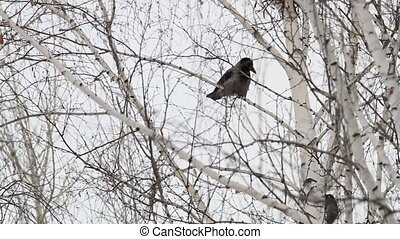 Crow sitting on a tree