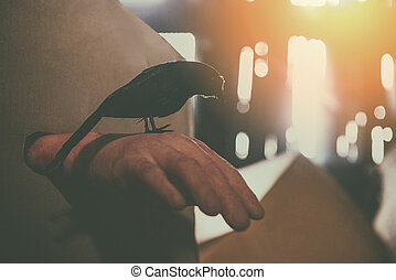 Crow sitting on a zombie hand halloween in abandoned house at night with moonlight