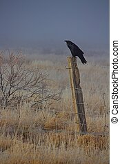 Crow sitting on fence post on the edge of a field on a foggy frosty morning