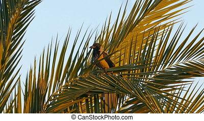 crow sitting on palm
