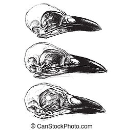 Crow Skull line work vector for use