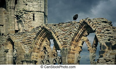 Crow Squawks On Abbey Ruins - Large black crow on abbey...