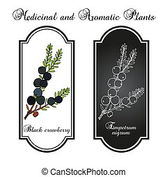 crowberry, pflanze, essbare , empetrum, schwarz, nigrum, ...
