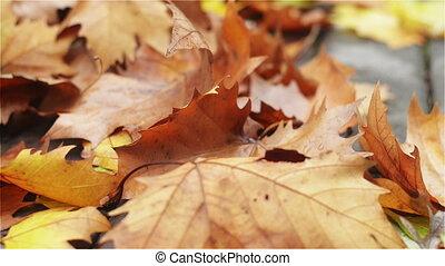 Crowd of Fallen Leaves on the Board