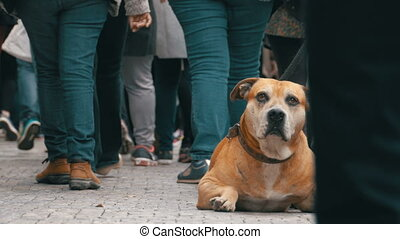 Crowd of Indifferent People on the Street Pass by Sad, Tied...