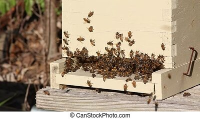 Crowded beehive entrance - Entrance to nucleus beehive is...