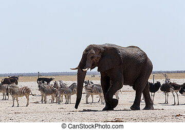 crowded waterhole with Elephants, zebras, springbok and orix