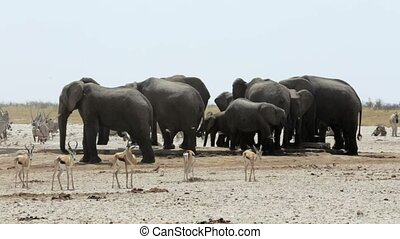 Crowded waterhole with Elephants, z