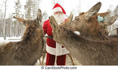 Crowding - Deer crowding around Santa asking for food
