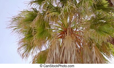 Crown and fronds of a tropical palm tree against a clear...