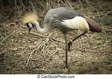 crown bird