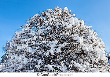 Crown of a tree covered with hard snow