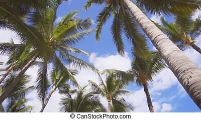 Crown of coconut palms against the sky. Tropical nature. 4k ...