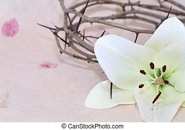 Crown of Thorns and Easter Lily - Crown of Thorns and Easter...