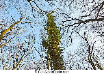 crown of tree under blue sky