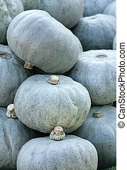 crown prince squash in a pile
