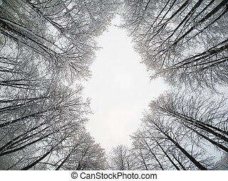 crown trees. bottom View