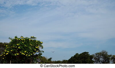 Crown with flowers on the background of sky with soaring eagle.