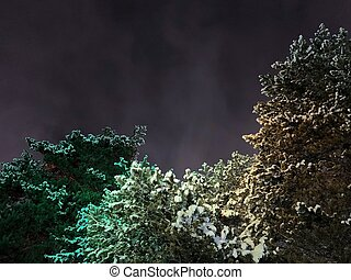 Crowns of pines in snow, illuminated by green light. Against the backdrop of the night sky.