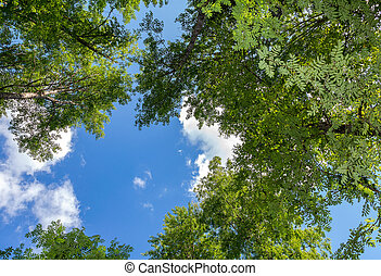 Crowns of tall foliar trees above his head in the forest against a blue sky