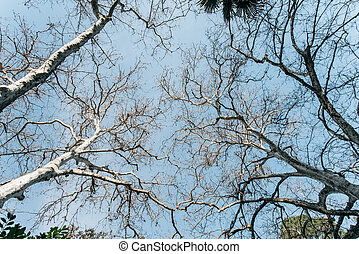 Crowns of trees against the blue sky