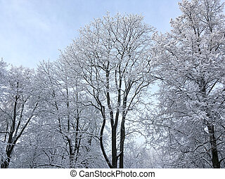 crowns of trees covered by snow against blue sky