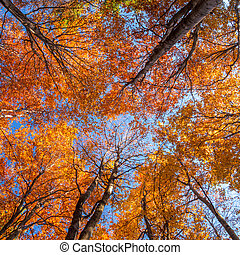 crowns of trees in autum theme